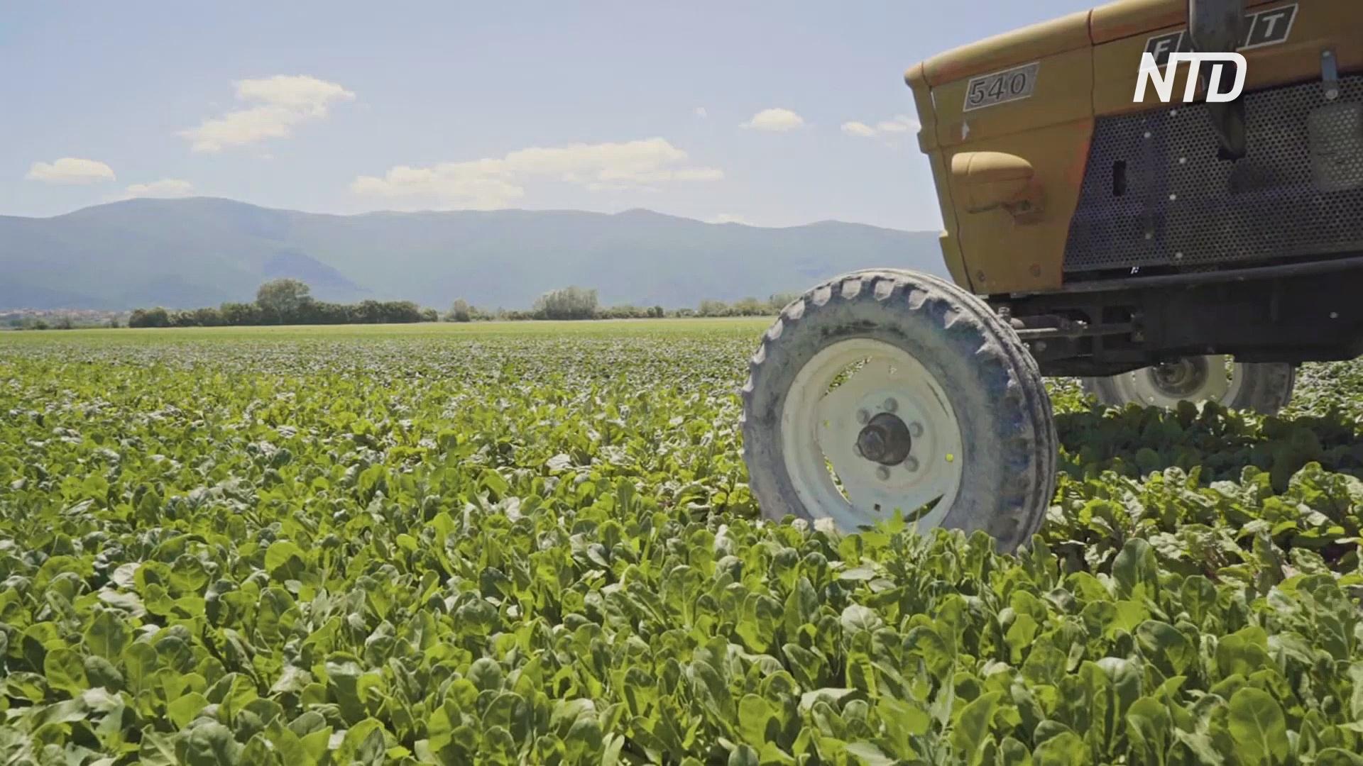 Фермеры платят, чтобы их работники вернулись на сбор урожая из Марокко