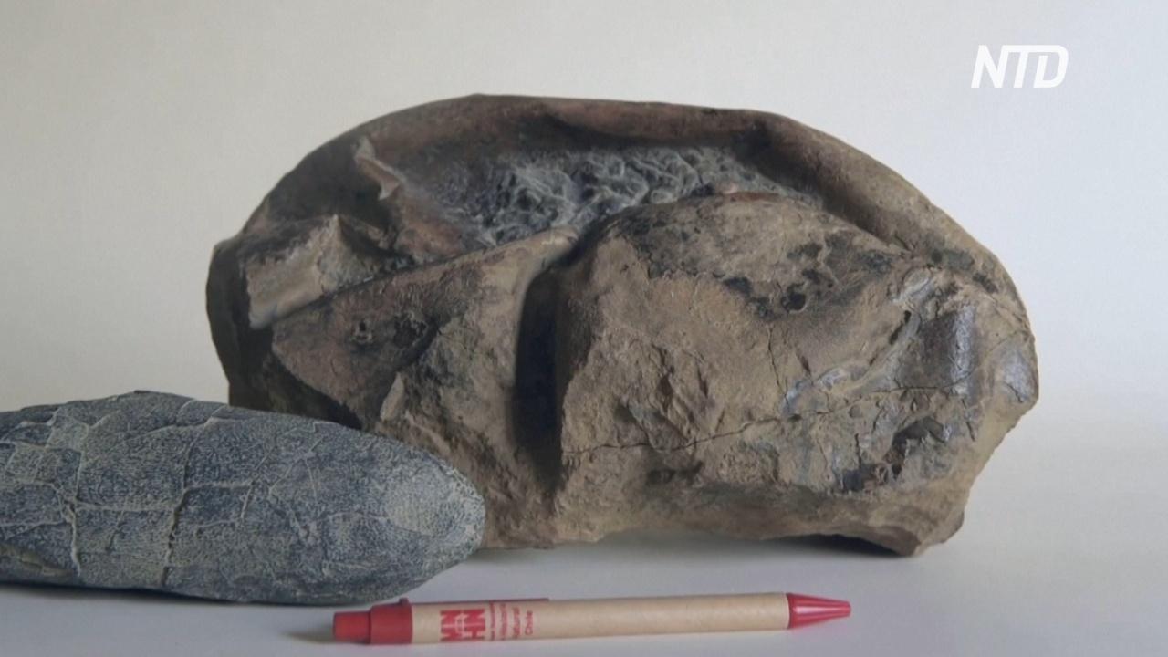 Гигантское древнее яйцо: учёные разгадали тайну окаменелости из Антарктиды