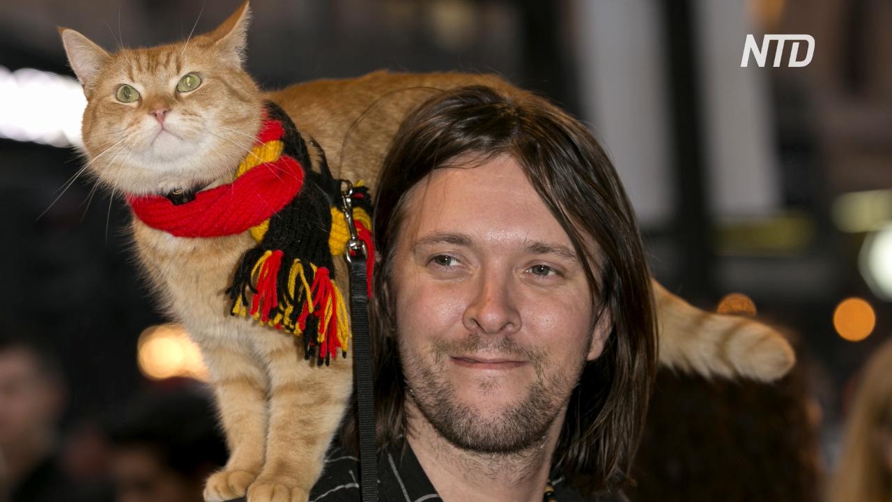 Знаменитый британский кот Боб умер в возрасте 14 лет