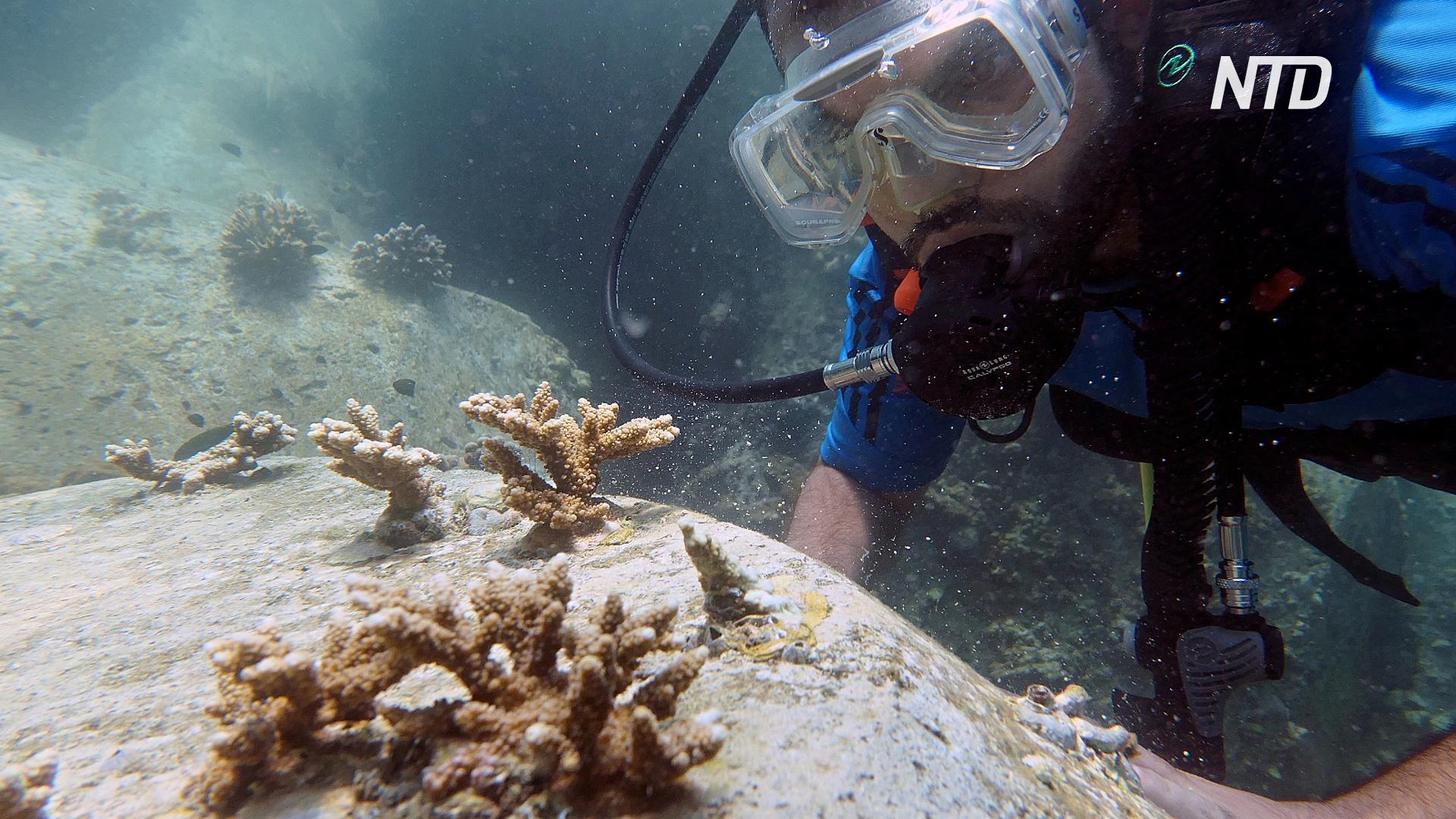 Дайверы строят гигантский коралловый риф у побережья ОАЭ
