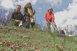 Экологи Австралии высаживают травы, чтобы защититься от пожаров