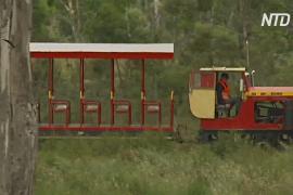 Волонтёры Тасмании восстанавливают узкоколейку, чтобы по ней снова ездили туристы