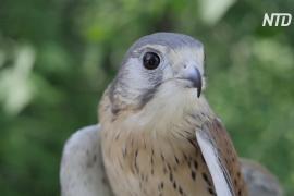 Новосибирские волонтёры за год спасают сотни хищных птиц