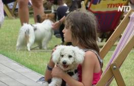 Собаки на день стали главными гостями парка «Тиволи» в Копенгагене