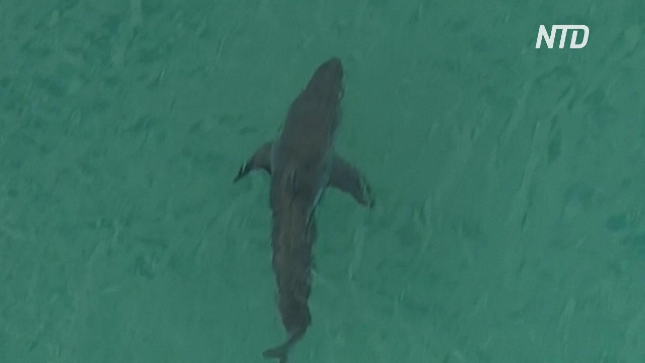Сёрфингист погиб в результате нападения акулы в Австралии