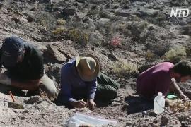 Недоразвитые крылья и крепкие ноги: в Аргентине открыли новый вид динозавров