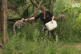 Венсенский зоопарк в Париже снова принимает гостей