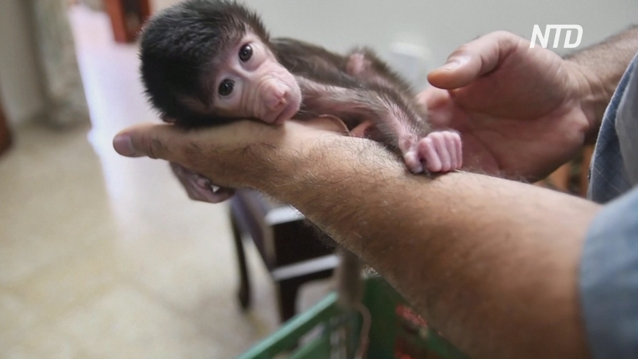 В палестинском зоопарке карантин спровоцировал беби-бум среди питомцев