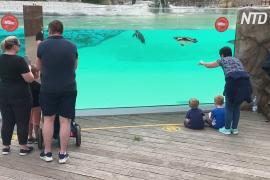 Лондонский зоопарк открылся после трёх месяцев карантина