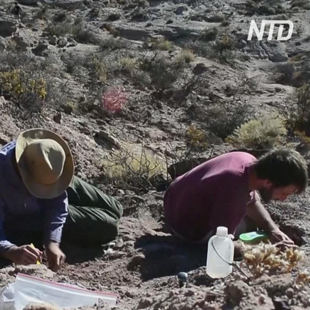 В Аргентине открыли новый вид динозавров с недоразвитыми крыльями