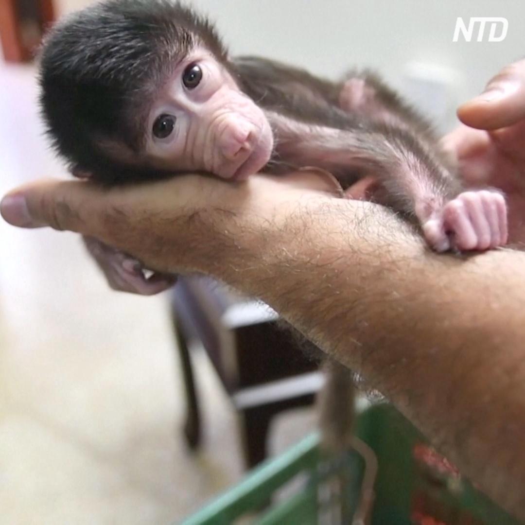 Беби-бум в палестинском зоопарке начался из-за карантина