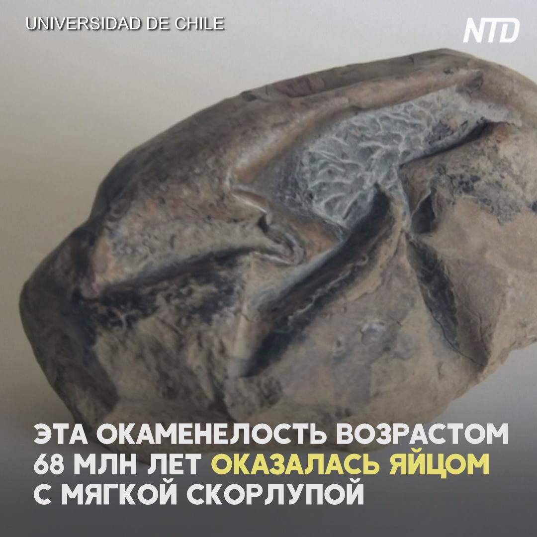 Учёные разгадали тайну окаменелости из Антарктиды