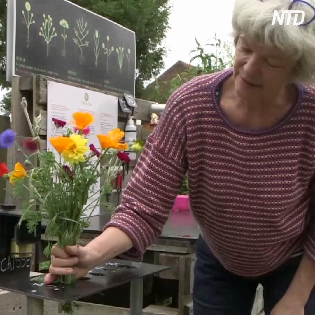 Эко-цветы и овощи: как работает бельгийская ферма самообслуживания