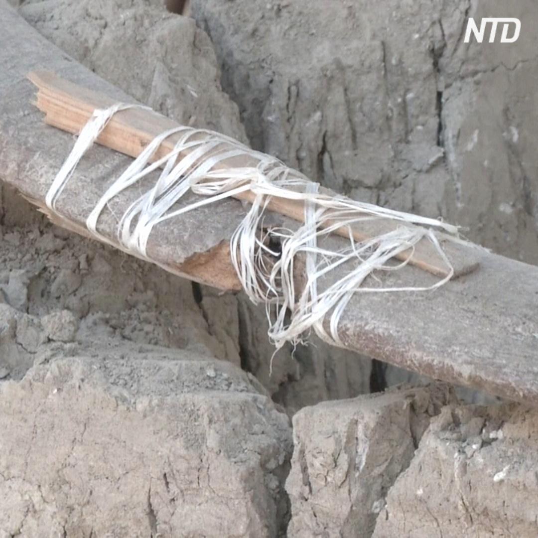 В Мексике нашли могилу мамонтов, завязших в древнем озере