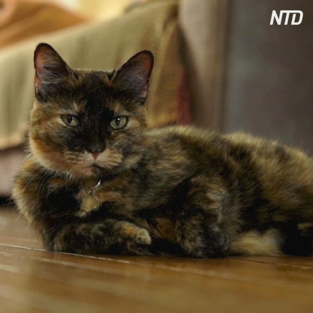 Французская кошка переболела COVID-19 и выздоровела