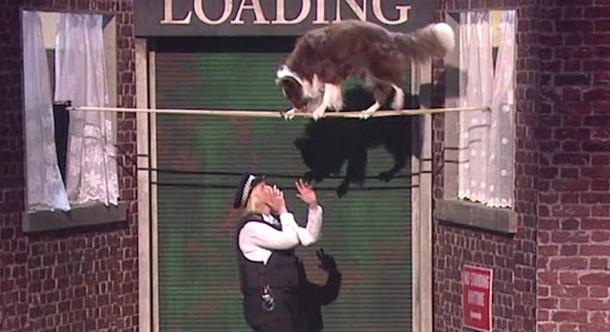 История собаки и женщины-полицейского потрясла судей