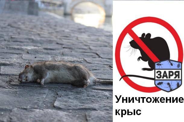 Борьба против животных с интеллектом или как избавиться от крыс?