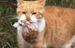 Почему бездомная кошка брала еду только в пакете