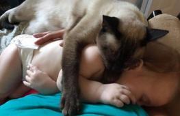 Сиамская кошка стала защитником для младенца