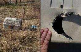 Как спасали собаку, брошенную в поле в переноске