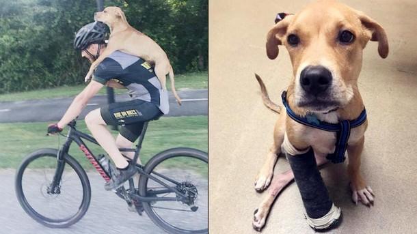 Почему фото подростка с собакой на спине стало вирусным