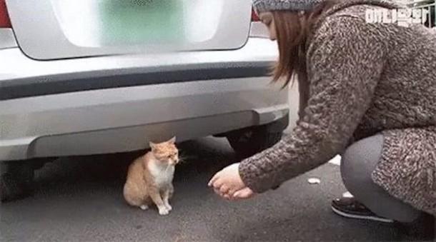 2 12 - Почему бездомная кошка брала еду только в пакете