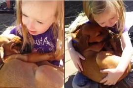 Видео колыбельной для собаки стало вирусным