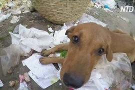 В Дакке помогают выжить голодающим бродячим собакам и диким обезьянам