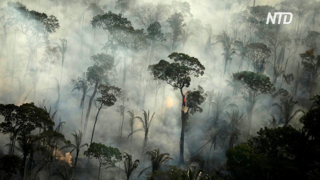 В Бразилии снова горят леса Амазонии