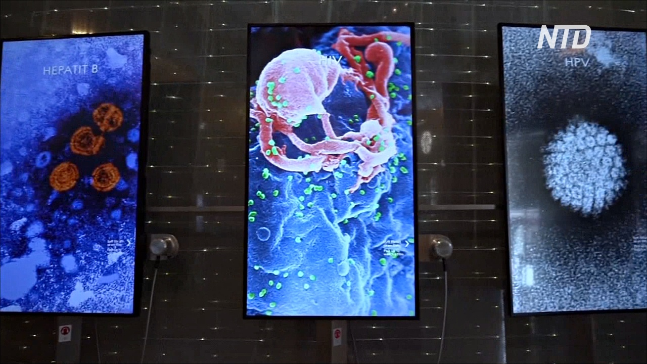 Выставка о пандемии открылась в Музее Нобеля