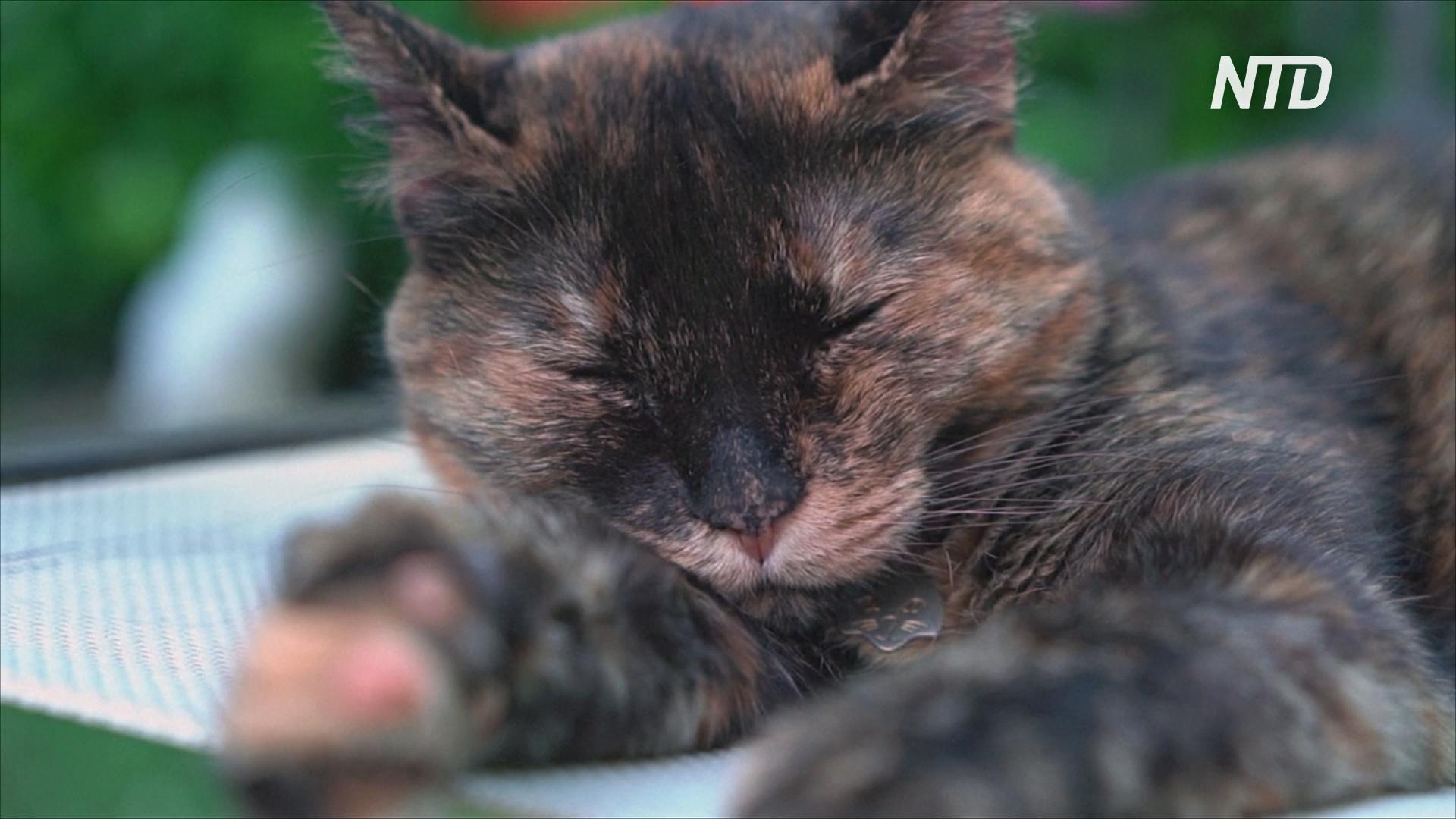 ВОЗ: заразиться COVID-19 от животных почти невозможно