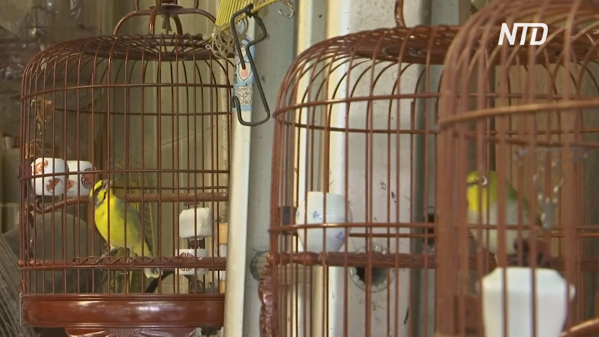 Птичьи клетки в Гонконге раньше висели на каждом углу, но теперь их почти нет