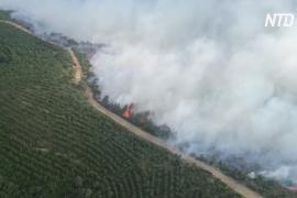 Полуострову Галлиполи в Турции угрожает масштабный лесной пожар