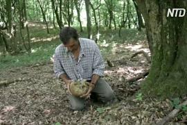 Переживший резню в Сребренице ходит по лесам и ищет останки убитых