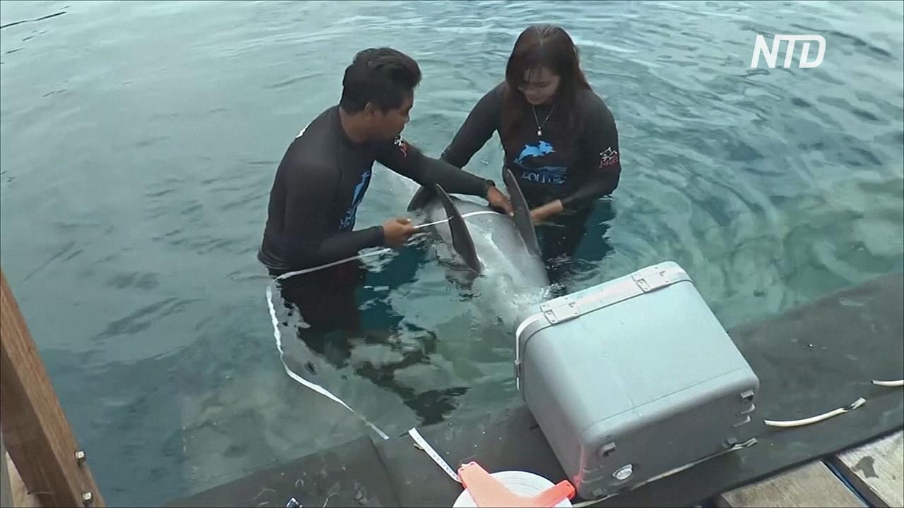 Центр реабилитации на Бали готовит к жизни в природе спасённых из неволи дельфинов