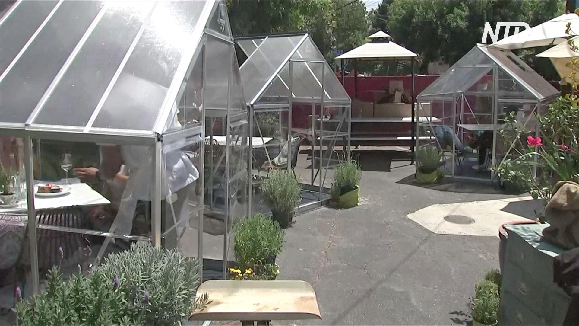 Обед в теплице: в Лос-Анджелесе работает необычное кафе