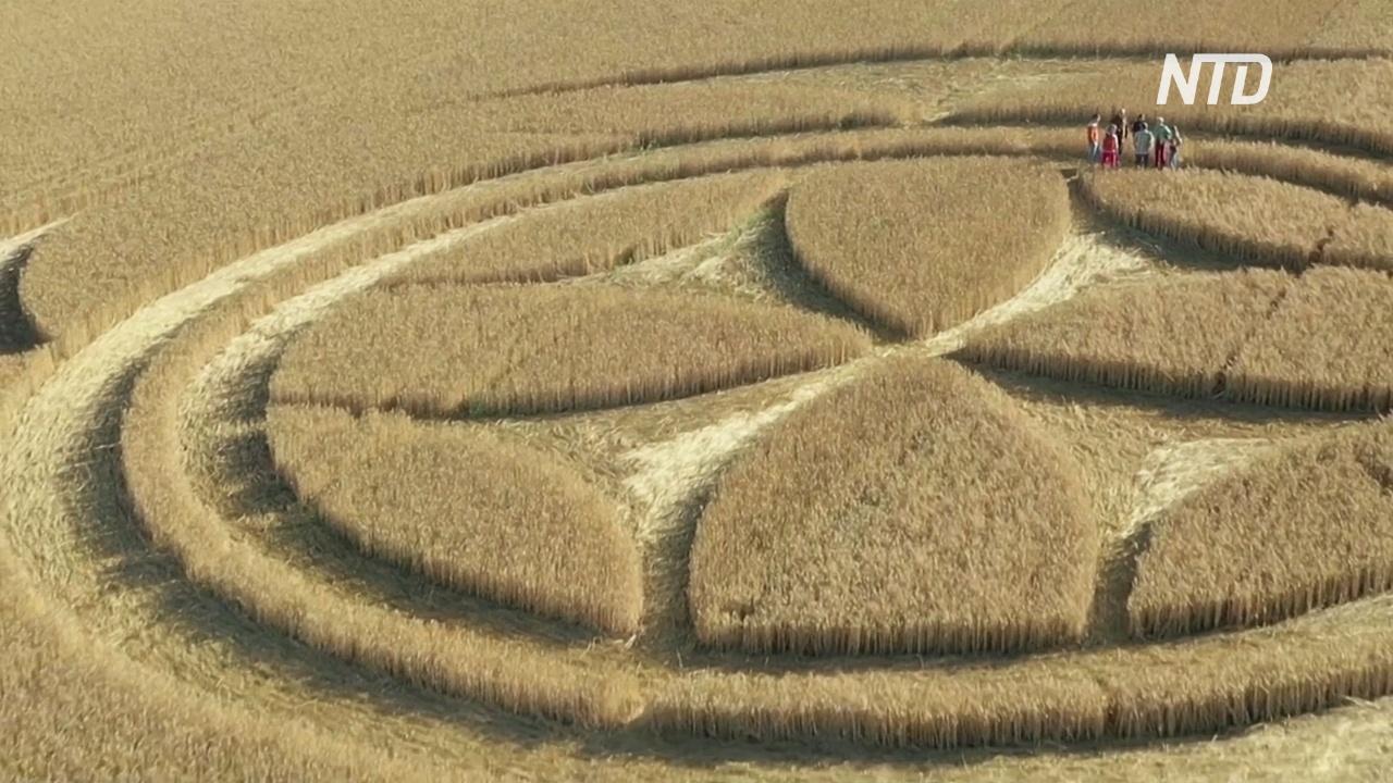 Круги и крест тамплиеров: на поле во Франции появился гигантский узор