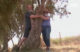 Обнимите дерево: как израильтяне восполняют недостаток близости с родными