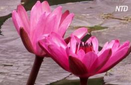 Отдых и глоток свободы: ботанический сад Рио-де-Жанейро снова ждёт гостей