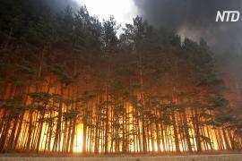 На Урале и в Сибири тушат лесные пожары