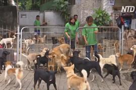 В Индонезии во время пандемии стало больше брошенных собак