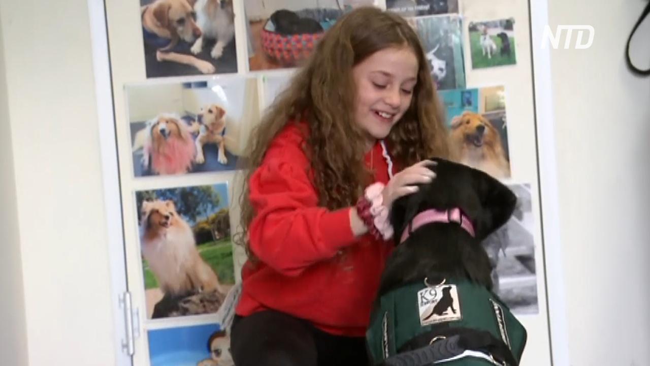 Собаки помогают австралийским детям вернуться к учёбе после карантина
