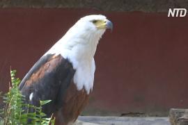 Птичий заповедник в Зимбабве пытается пережить пандемию