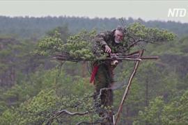 Рукотворные гнёзда для птиц: как белорусский орнитолог помогает пернатым