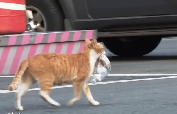 4 11 - Почему бездомная кошка брала еду только в пакете