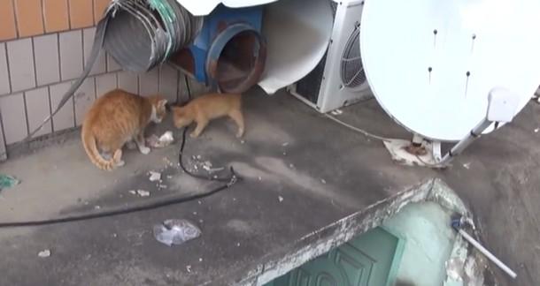 5 7 - Почему бездомная кошка брала еду только в пакете