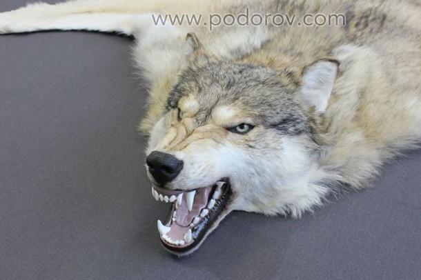 Ковер из шкуры волка 150 см