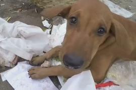 Голодающим собакам и обезьянам в столице Бангладеш помогают выжить люди