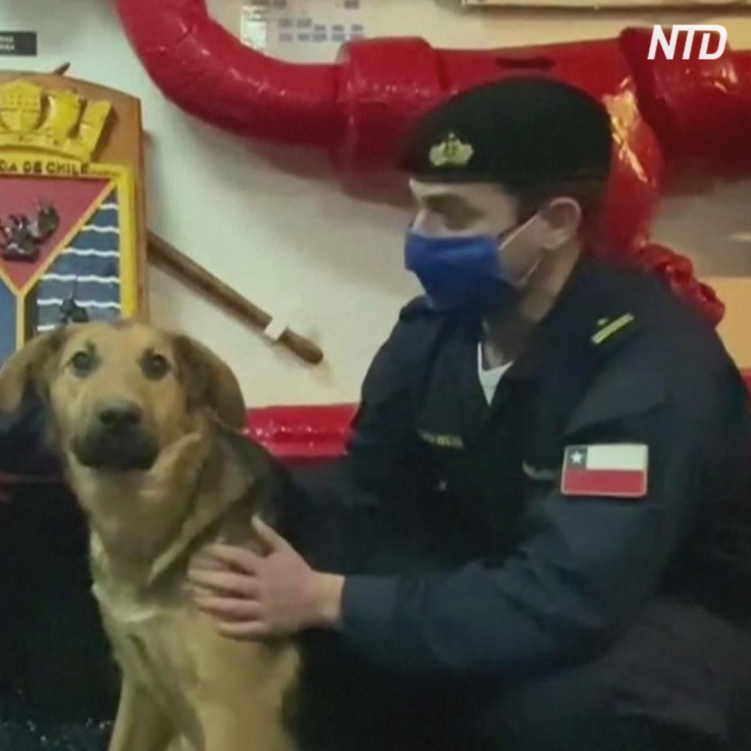 Чилийские моряки ищут хозяина собаки, которую они вытащили из воды далеко от берега