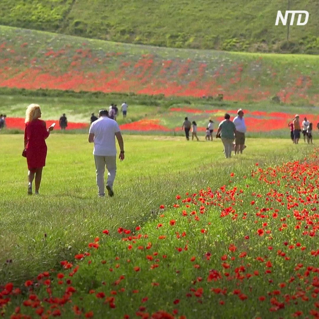 Равнина в Умбрии превратилась в цветущий ковёр